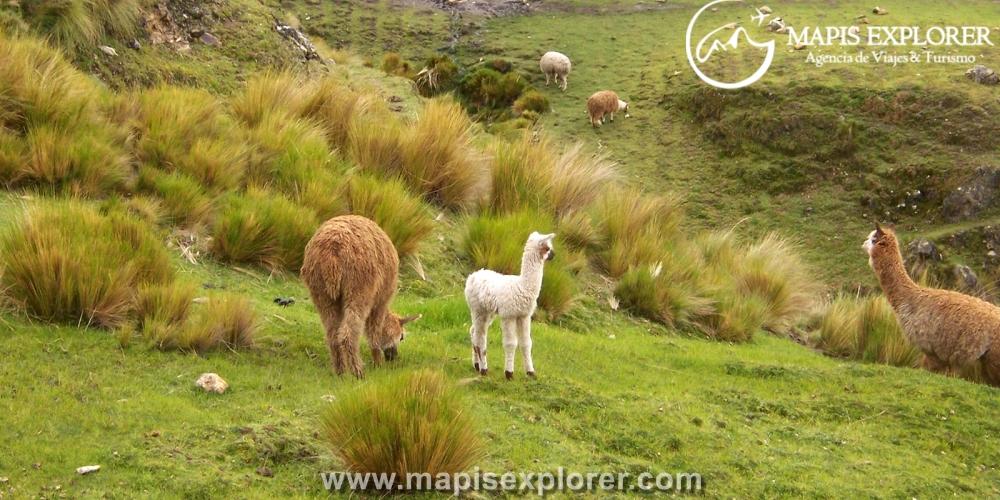 Lares Trek 4 días 3 noches - Valle Lares Machu Picchu 4 dias - Trekking